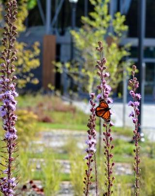 Attract Bird and Butterflies